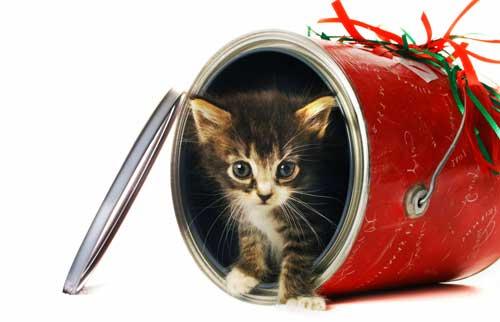 ideas para decorar en navidad economicas
